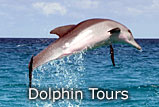 Crystal River Florida Dolphin Tour