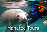 Crystal River Florida Mantee Tour