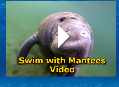 Swim with Manatees Video